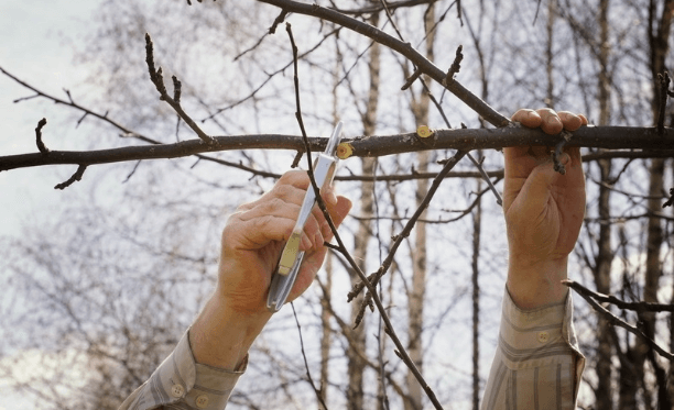 The easiest way to Trim trees